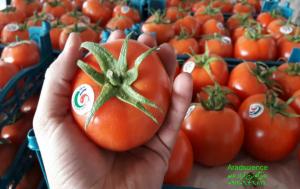 کیسه نانو گوجه فرنگی