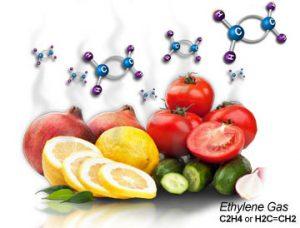 دستگاه رنگ آوری میوه