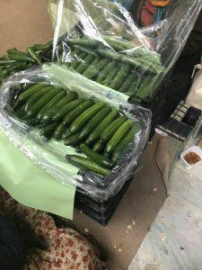 قیمت کیسه نانو خیار