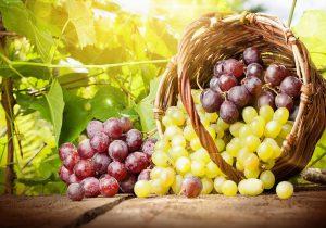 سولفورپد نگهدارنده انگور